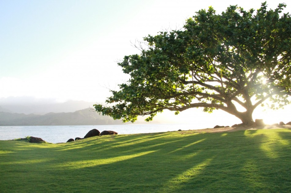 Princeton, Kauai